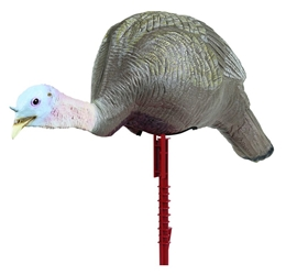 Masters Series™ Active Feeding Hen master series, master, series, turkey, turkey decoy, turkey decoys