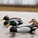 Masters Series™ Extreme Magnum Floater Mallard - 3-Pack - 5900MSU