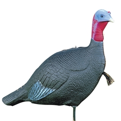 "Feather Flex® Aggressive Jake turkey, turkey decoy, turkey decoys, aggressive jake, aggressive decoy, aggressive jake, jake, featherflex, feather flex ""Feather Flex"", ""Aggressive Jake"""